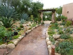 south african native plants gardening south africa ideas google search garden pinterest
