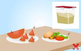 comment se d饕arrasser des moucherons dans la cuisine 12 images