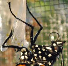 monarch butterfly garden delights arts crafts