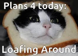 Loaf Meme - cat loaf on imgfave