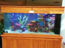 home accessories fish tank decor ideas with toilet custom fish