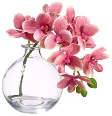 Flowers Glass Vase Silk Phalaenopsis Orchid In Glass Vase Pink Traditional