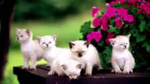 cute cat pictures cute cat pictures 2017 cute cat kittens