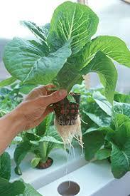 cara membuat cairan hidroponik bagaimana cara membuat sendiri nutrisi untuk hidroponik tumbuhan