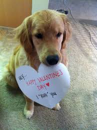 Cute Valentines Memes - dog wishes you a happy valentine s day ruff you