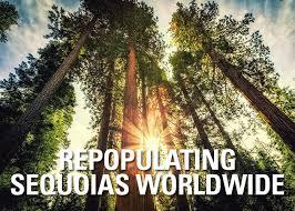 Trees Worldwide Repopulating Sequoias Worldwide Arborjet