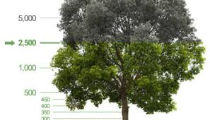 want a shade tree in front of your house trees atlanta planting