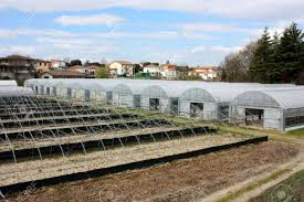 greenhouses for cultivating ornamental plants and vegetables