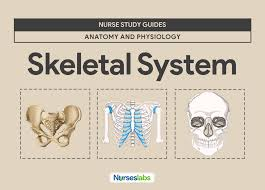 anatomy study guides gallery learn human anatomy image