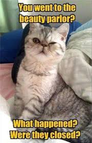 Success Cat Meme - success cat is a winner success cat and food