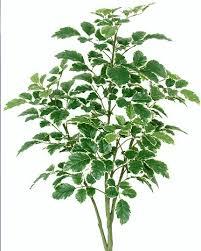 buy now on sale beech silk 3 foot tree pvc trunk 3 foot beech