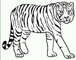 Top Coloring Pages Of Tigers Free Downloads Fo 6926 Unknown Coloring Pages Tiger
