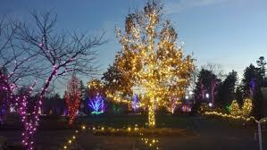 big color explosion light show brightens up boothbay gardens