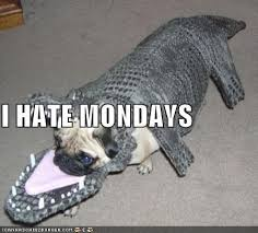 Monday Funny Meme - i has a hotdog monday funny dog pictures dog memes puppy