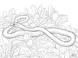superb rattlesnake coloring pages with snake coloring page