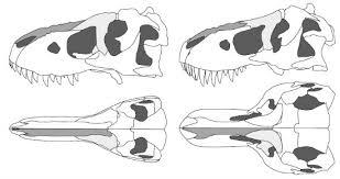 you say tyrannosaurus i say tarbosaurus science smithsonian