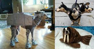 Funny Costumes 2014 15 Widescreen Wallpaper Funnypicture Org by Funny Animal Costumes 26 Background Wallpaper Funnypicture Org