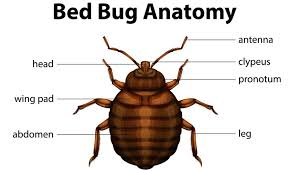 Bed Bug Bed Bug Lawyer In Dc And Nyc