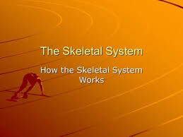chapter 15 skeletal muscular and nervous systems ppt download