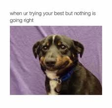 Frowning Dog Meme - just keep holding that frown upside down memebase funny memes
