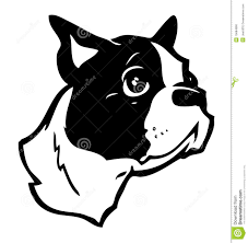 boston terrier illustration stock photo image 15684890