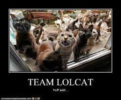 Herding Cats Meme - play as a team guild progression tastes like battle chicken