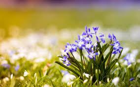 crocus flowers spring nature 7020784