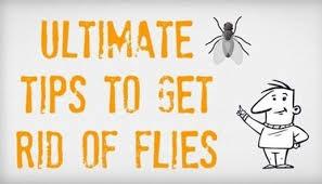 Getting Rid Of Flies In Backyard How To Get Rid Of Flies Fast U0026 Naturally