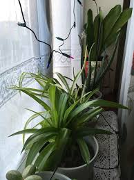 inside house plants indoor house plants for sale in manor house london gumtree