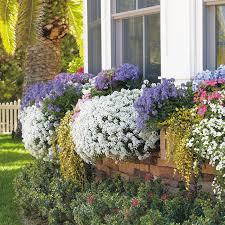alyssum garden gate enotes