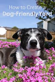 best ground cover for dogs friendly backyard install it direct