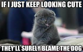 Success Cat Meme - 18 funny pieces of cat logic every cat owner will understand world