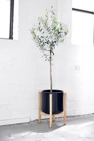 93 best indoor plants images on pinterest indoor plants plants