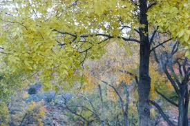 free stock photo of trees with yellow u0026 orange leaves