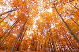 bright colored autumn trees in mayberry state park michigan