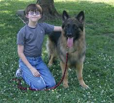 belgian shepherd epilepsy awareness support and a cure for epilepsy our january 2012