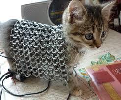 Funny Kitten Meme - the 50 best funny kitten pictures of all time