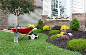 Best Trees For Backyard by The Best Trees For Commercial Landscaping The Veron Company