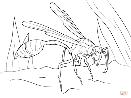 mud dauber wasp coloring page free printable coloring pages