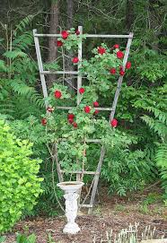 Climbing Plants On Trellis How To Build A Trellis For Climbing Roses Hometalk