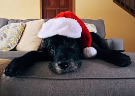 pet christmas free photo dog christmas pet christmas dog free image on