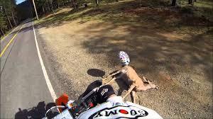 Dead Squirrel Meme - get well soon balloon deer hit on side of road dead youtube