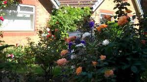 baz u0027s hobbies 13p uk garden small backyard tomatoes grapes