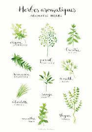 herbes cuisine aquarelle cuisine oeuvre d herbes aromatiques par nathalieouederni