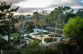 southern california native plants landscaping drought tolerant landscaping ideas from san diego