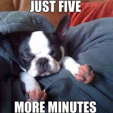 Sleepy Memes - aww on twitter sleepy sundays five more minutes puppy