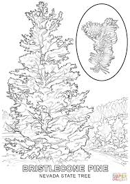 nevada state tree coloring page free printable coloring pages