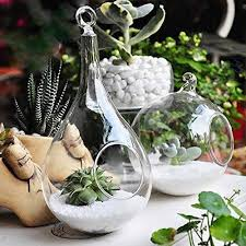 mkono 2 pack glass hanging planter plant terrarium globe and