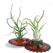 roots in rust unique planters terrariums home accessories