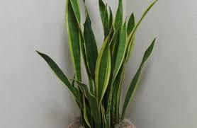 unique indoor planters plant indoor pots for plants tremendous indoor planters